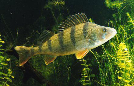 рыбалка на алтае где сегодня клюет рыба